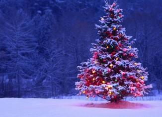 karácsonyfa vagy műfenyő
