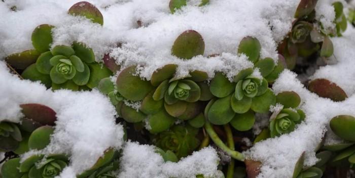 Növények az erkélyen télen