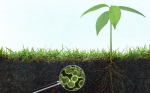 talaj humusztartalma