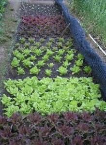 biogarden3