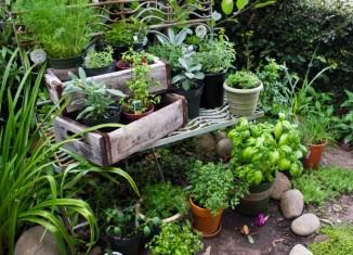 gyógynövénykert
