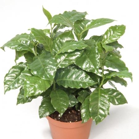 Dísznövények locsolás nélkül