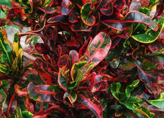 színes levelek