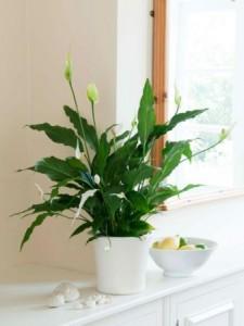 növények fényigénye