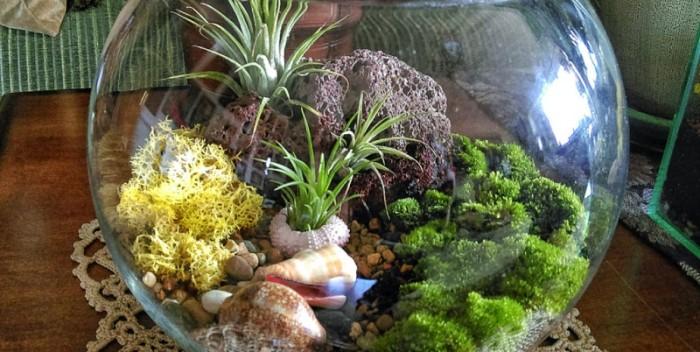 mini trópusi üvegház