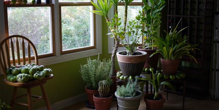 északi fekvésű ablak növényei