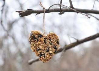 madáretetés télen