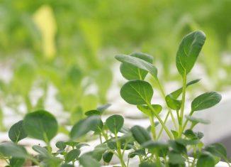 növénytermesztés otthonunkban