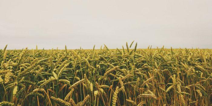 agrárárak növekedése