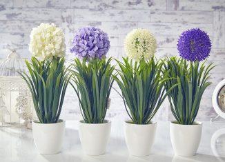 növények költöztetése